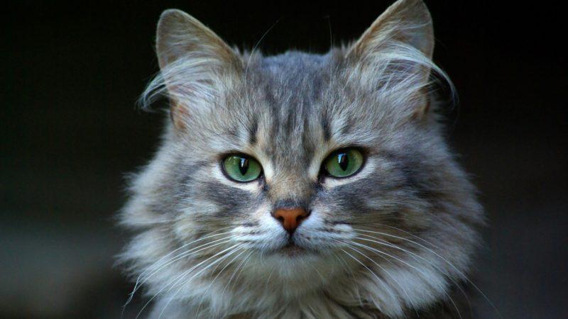 Che cosa sono gli sbalzi di pressione nei gatti!