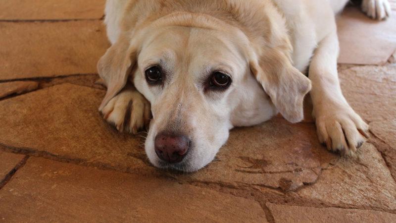 Obesità del cane: i consigli di Marco Maggi!