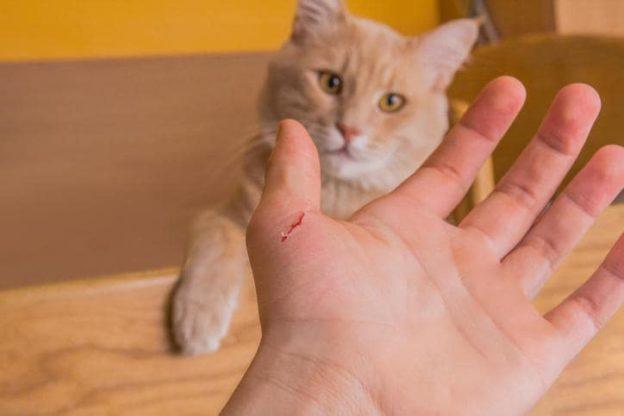 Cani e gatti: se a mordere sono i migliori amici dell'uomo!