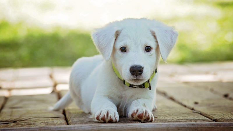 Cane: come interpretare il linguaggio del cucciolo!