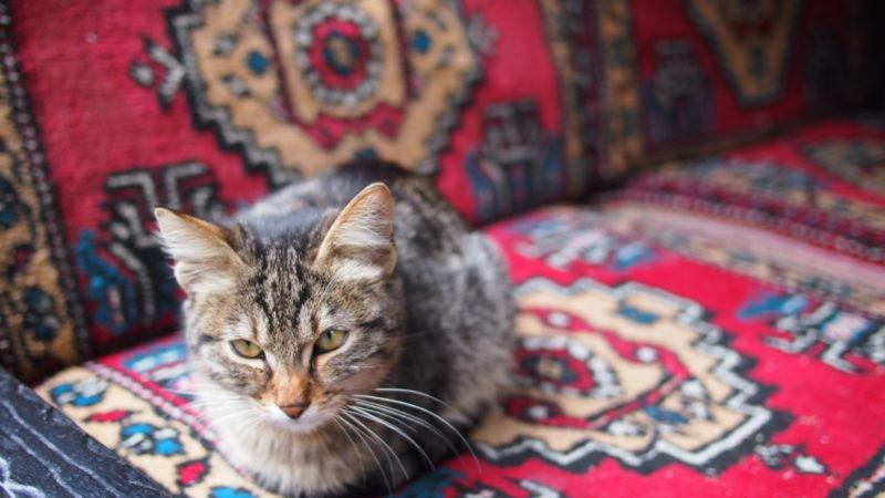 Istanbul: la città dei gatti!