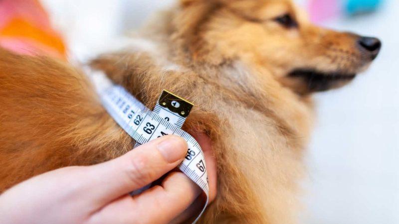 Diabete in cani e gatti: occhio alla dieta!