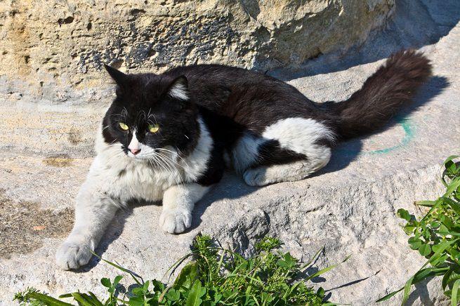 Il mio gatto, in tarda età, ha iniziato a mangiare tantissimo: che cosa può significare?