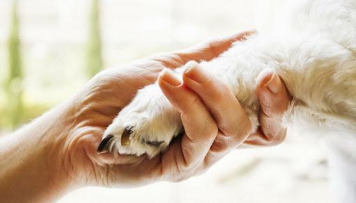 Pet therapy per bambini con difficoltà…