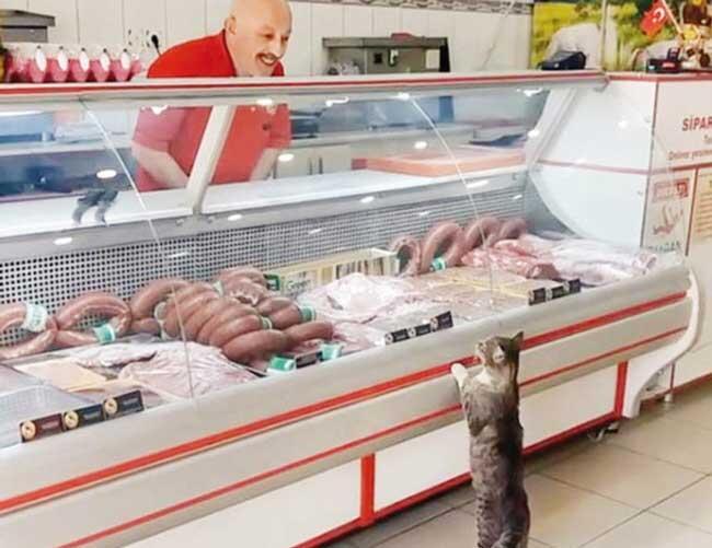 Ikram, il macellaio ricco per merito di un gatto!