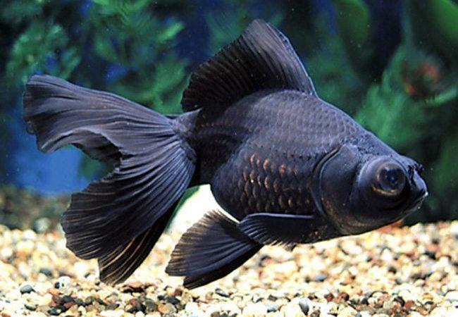 Acquario: quali pesci scegliere?