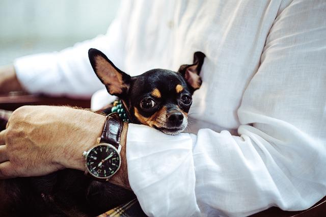 Pet Therapy: psicologi a 4 zampe!