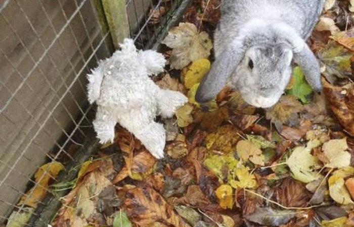 Il coniglio abbandonato (con il suo peluche)…