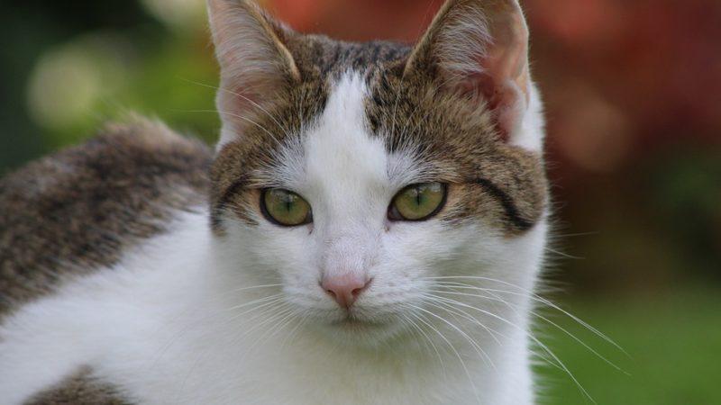 Cani e gatti: non sono un veicolo di contagio…