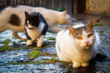 Salina: la bella storia di Antonello e i suoi gatti!