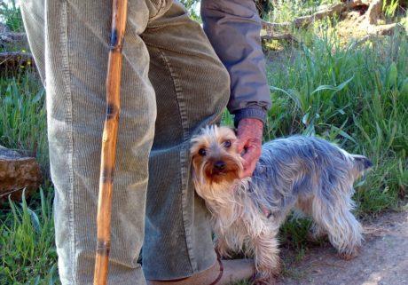Anziani e animali: un rapporto da tutelare!