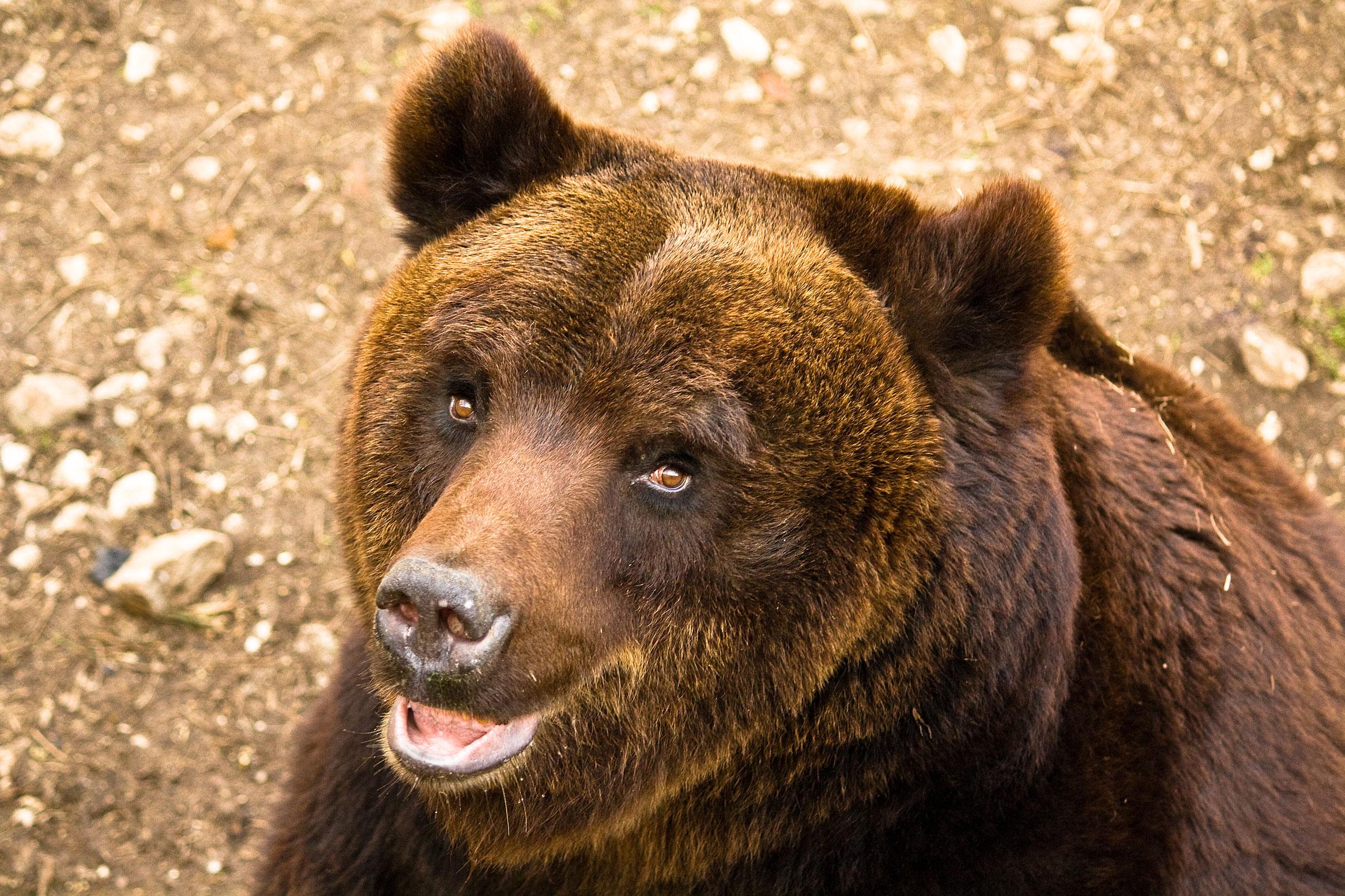 Abruzzo: un esempio da seguire per la tutela degli orsi!
