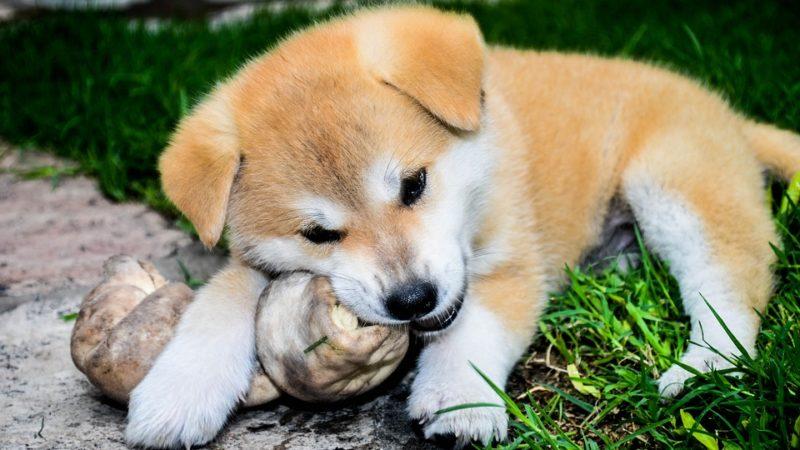 Cani: masticare bene, li rilassa!