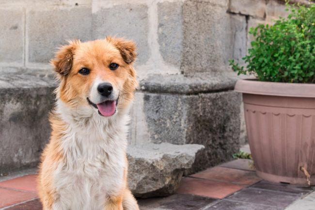 I cani non sanno non amare…