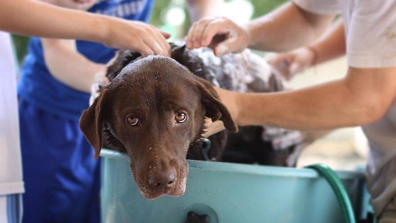 Cani: puliti, ma non troppo!