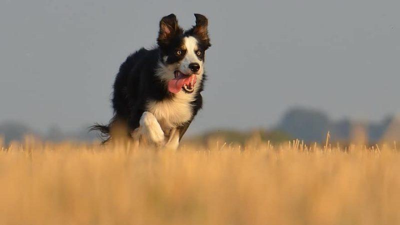 RunningDog, il programma di allenamento per runner e cani in cerca di adozione…