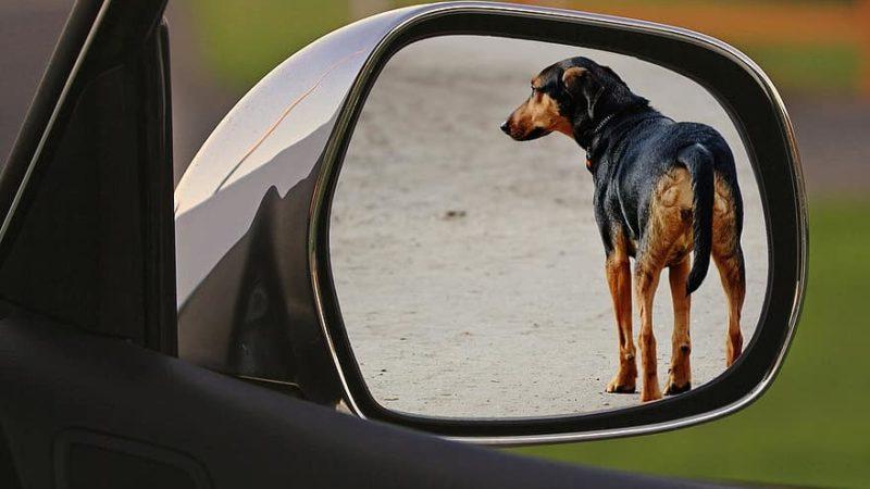 Cane muore abbandonato in un giardino privato. LNDC denuncia!
