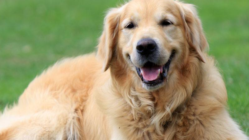 Cani: quando arriva il prossimo pasto?