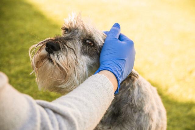 Anche i nostri pet soffrono di allergie…