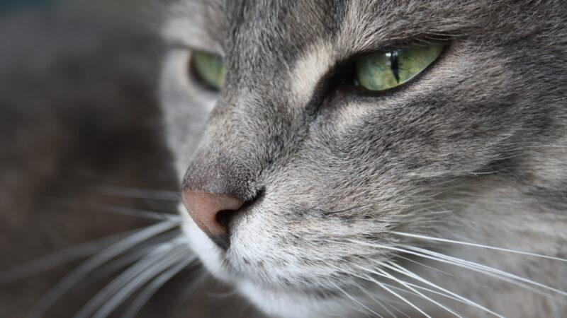 Anche al gatto viene la cistite…