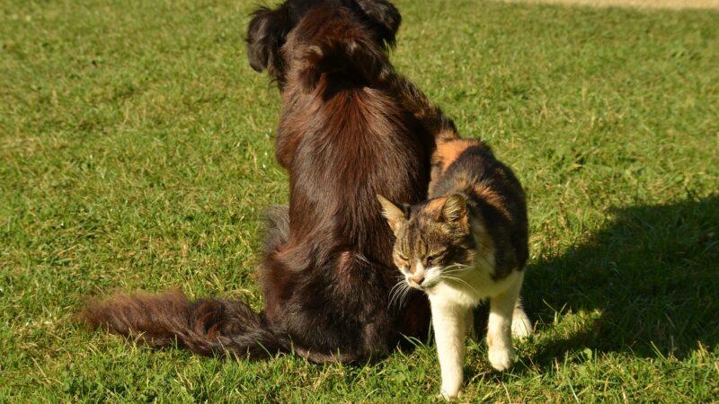 A che età si fanno riprodurre gli animali domestici?
