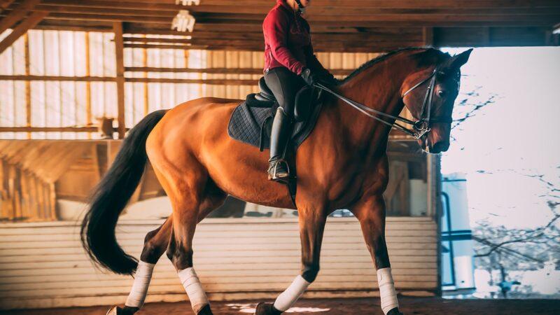 A cavallo, in mezzo alla natura…