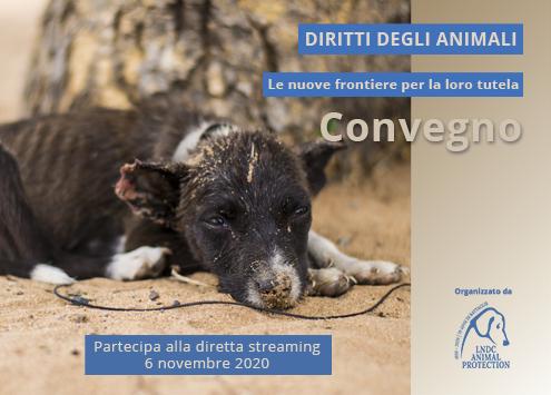 """Convegno in diretta streaming: """"Diritti degli Animali: le nuove frontiere per la loro tutela""""…"""