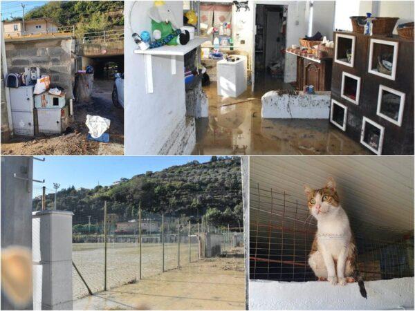 Aiutiamo gli animali di Ventimiglia!