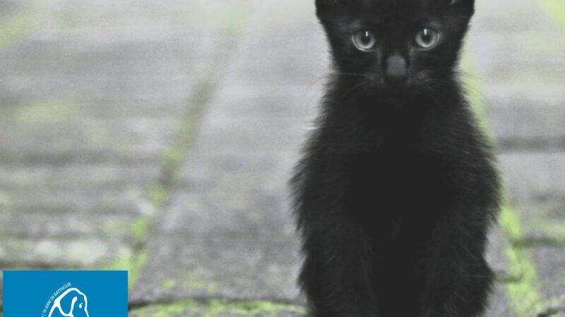 Bullo prendi a calci un gattino a Casoria (NA), LNDC lo denuncia!