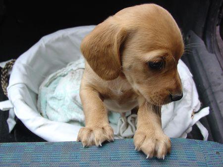 Cina, 5mila animali morti nelle scatole in attesa di essere spediti…