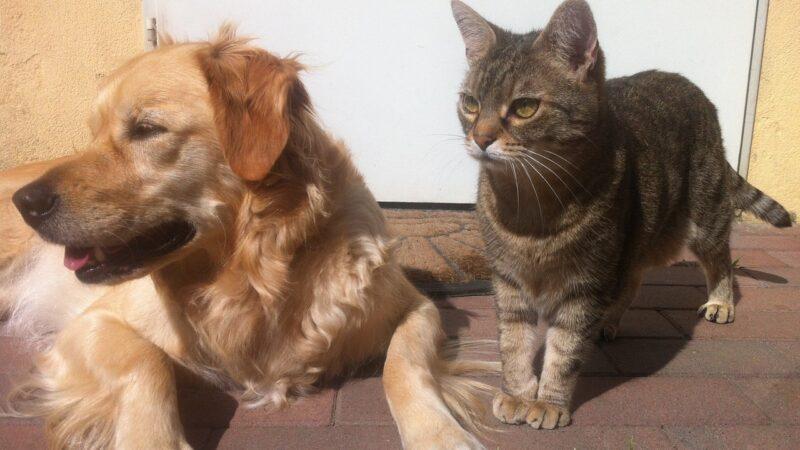 Quando sterilizzare cani e gatti?