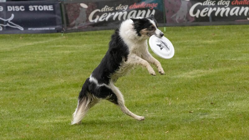 Disc Dog: e il cane si diverte!