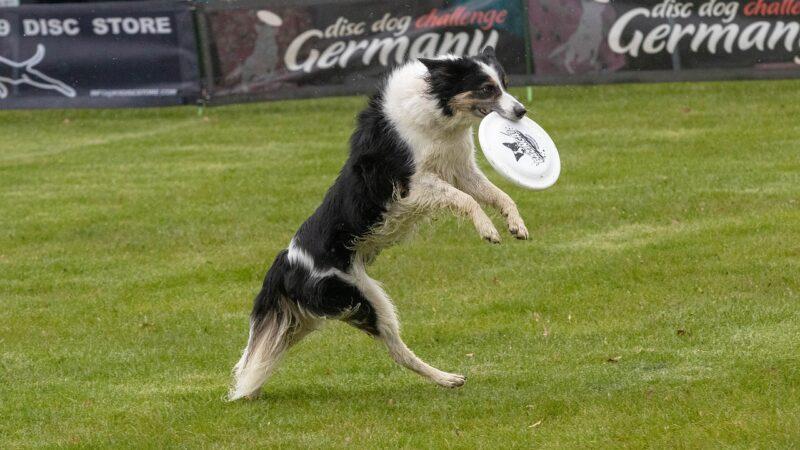 Disc Dog: e il cane si diverte!