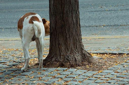 Fai fare al tuo cane la pipì nel posto giusto…