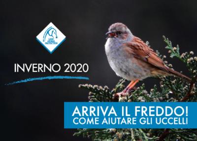 I consigli di LNDC per aiutare gli uccelli durante l'inverno…