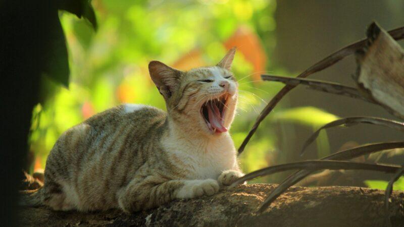 Gatti: che proprietario sei?