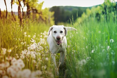 Cani: qui, io posso entrare!