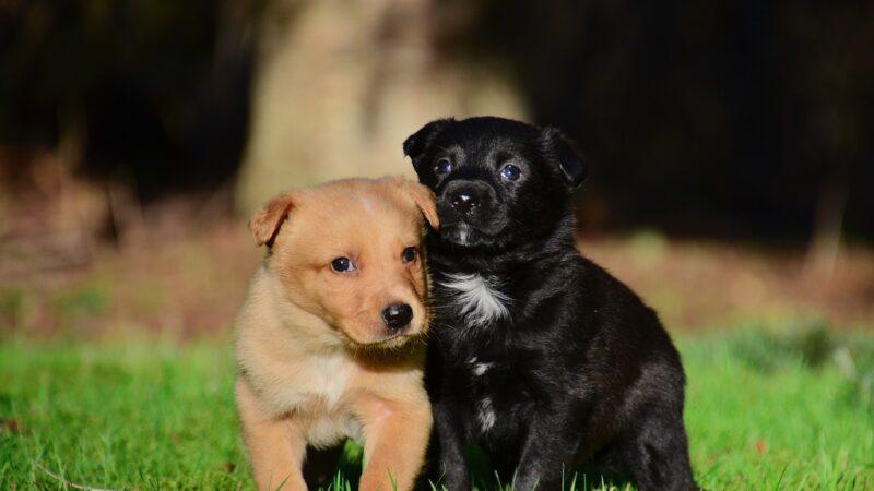 Come accogliere un cucciolo in casa…