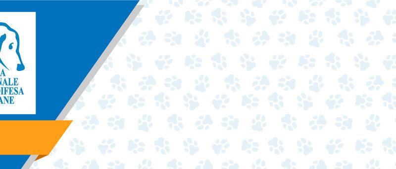 Lega Nazionale del Cane: siamo sempre al loro fianco!