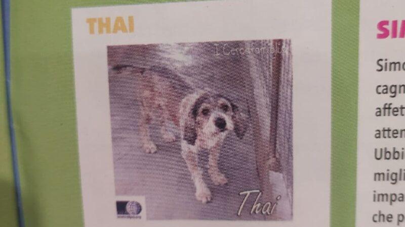 Adozioni: aiutiamo Thai a trovare una casa!