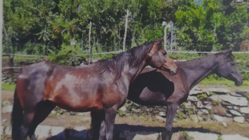 Ami i cavalli? Adotta Naomi e Nadine…
