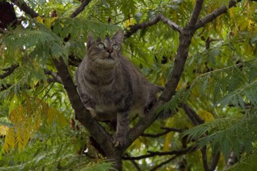 Gatto domestico: un piccolo serial killer…