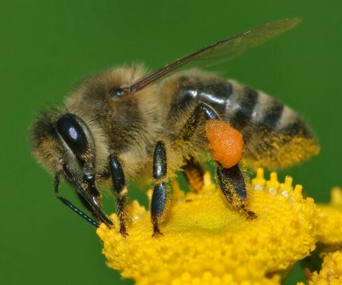 Salviamo le api selvatiche…