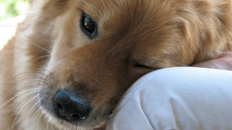 Pet Therapy e bambini!