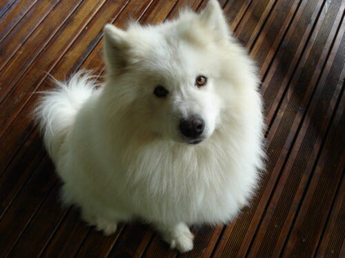 La sterilizzazione rispettosa dei cani…