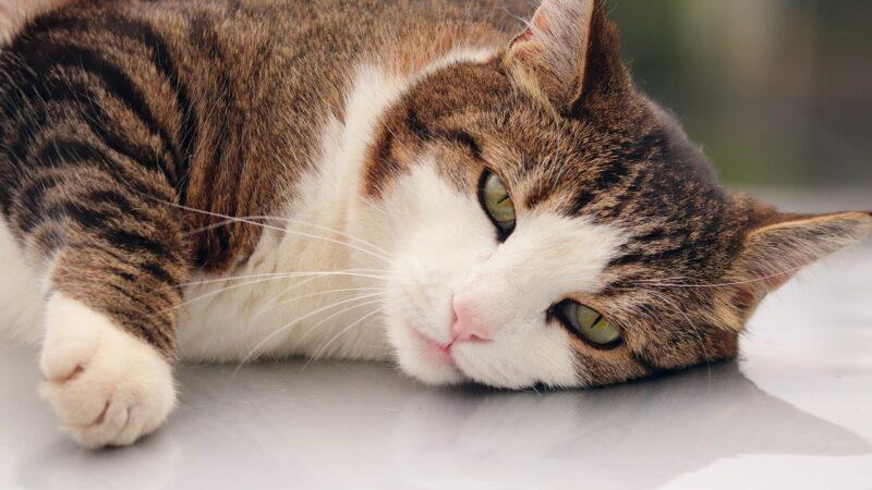 È vero che è sbagliato dare il latte ai gatti? Per quale motivo?