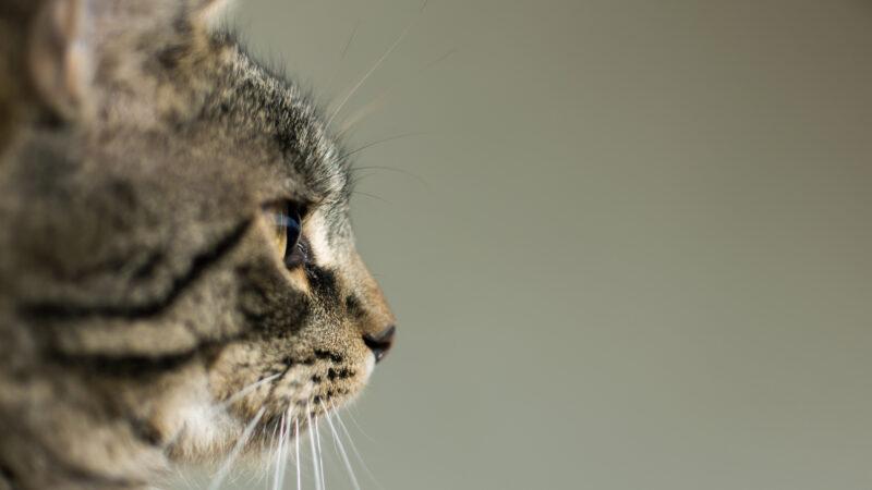 Il fumo passivo è una minaccia anche per i nostri pet!