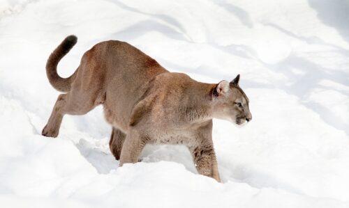 Puma: dal fisico bestiale!