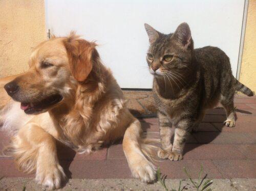 Se per cane e gatto si prepara il cibo in casa, bisogna aggiungere il sale?