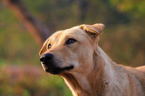 Dermatite atopica: la ricerca di Hill's Pet!